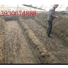 农用大棚育苗线