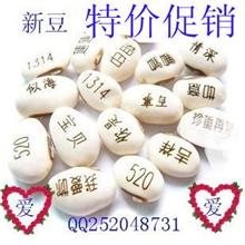 义乌魔豆厂家直销爱情魔豆白豆魔豆种子新奇特迷你植物工艺品