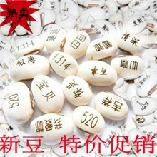 义乌魔豆厂家直销爱情魔豆种子(白豆)新奇特迷你植物工艺品