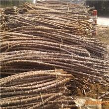 供应广西鹿寨县2011年春季未受霜冻高产高淀粉红柄细叶木薯种茎