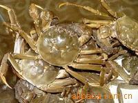 供应螃蟹苗