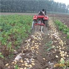 洪珠马铃薯收获机山东省农业机械鉴定站鉴定合格产品土豆收割机