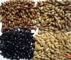 厂家供应黑麦芽,大麦芽