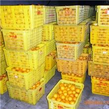 供应批发优质正宗四会德庆果园种植冰糖橘市场批发价服务