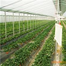 供应优质草莓