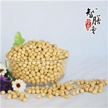 厂家直供熟黄豆低温烘焙非转基因现磨五谷豆浆原料QS认证