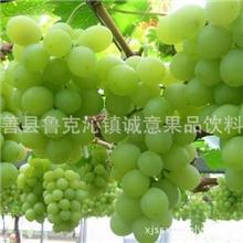 厂家直销鄯善县纯天然绿色新渝绿旺吐鲁番葡萄预定葡萄价格低